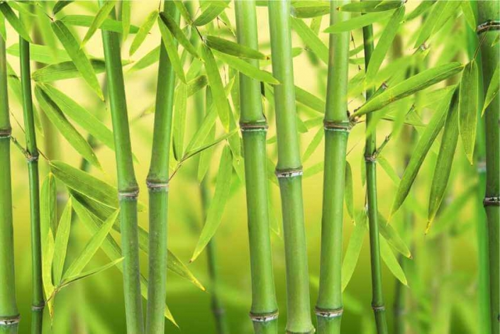 "Бамбук на здравето ""GUOZHEN"""